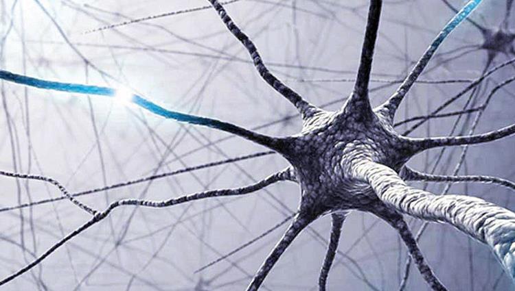 العصبيية الصماوية