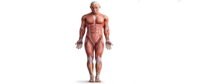 ماهو دليل شامل لأمراض العضلات الوراثية