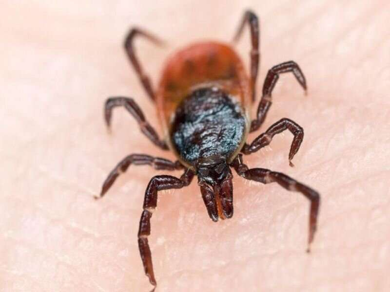 Lyme disease can wreak havoc on mental health